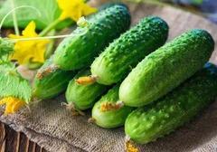 黄瓜敷脸有什么功效?生吃黄瓜的作用是什么?哪些人群不适合大量食用黄瓜