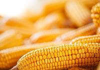玉米的功效和作用介绍