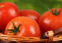 番茄生吃的介绍
