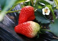 适合孕妇吃的水果