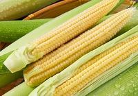 玉米笋的功效和作用