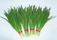 韭菜的营养与功效