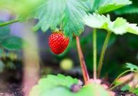 草莓的清洗方法