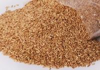 雀麦的好处和禁忌