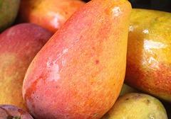 芒果的功效和作用介绍