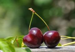 樱桃酒的酿制方法