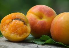 杏子酒的功效有哪些?常喝杏子酒能减肥么,杏子酒的禁忌有哪些?
