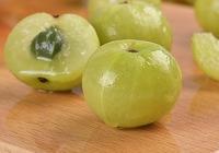 油柑果的成熟季节