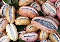 木通果的功效和吃法