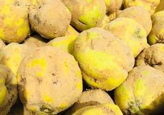 什么是榲桲,榲桲与梨子有什么区别?榲桲的吃法介绍