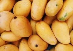 芒果减肥法